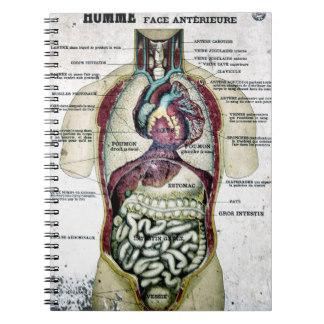 11 Carátulas para cuadernos de anatomía (1)