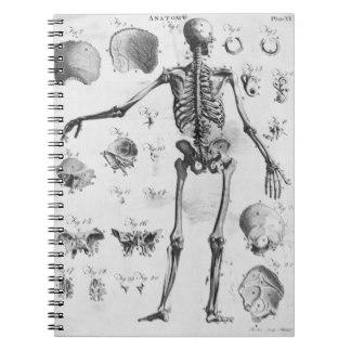11 Carátulas para cuadernos de anatomía (11)